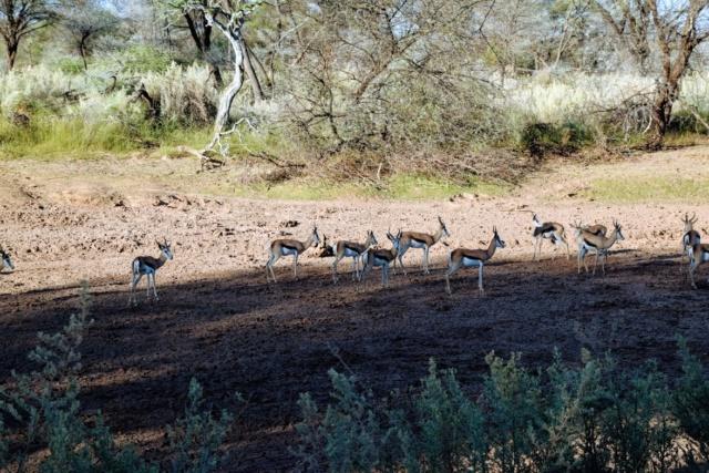 Retour sur notre voyage en solo Namibie - Botswana - Zimbabwe  0ohjjr10