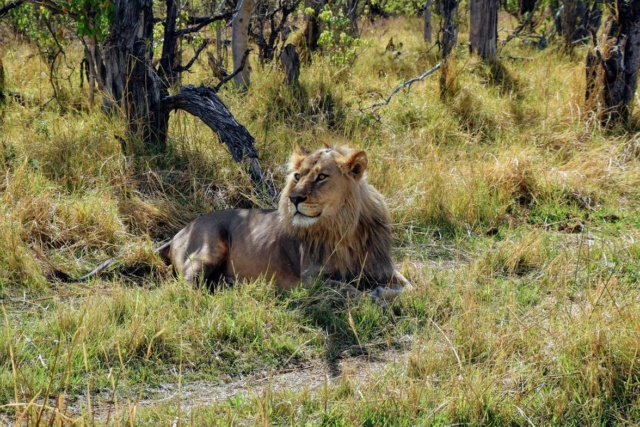 Retour sur notre voyage en solo Namibie - Botswana - Zimbabwe  46994010
