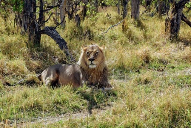 Retour sur notre voyage en solo Namibie - Botswana - Zimbabwe  47026311