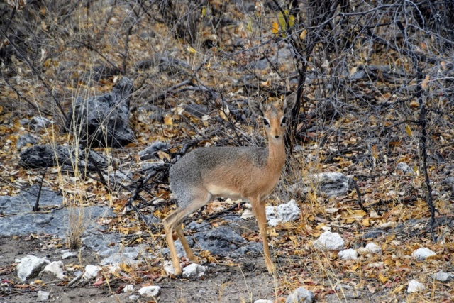Retour sur notre voyage en solo Namibie - Botswana - Zimbabwe  7oywm910