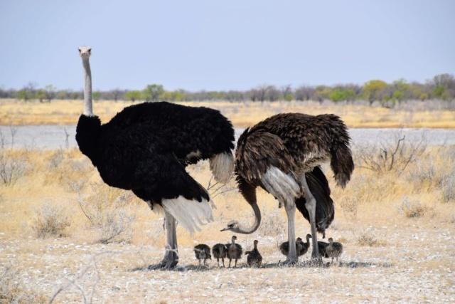 Retour sur notre voyage en solo Namibie - Botswana - Zimbabwe  8p0-ud10