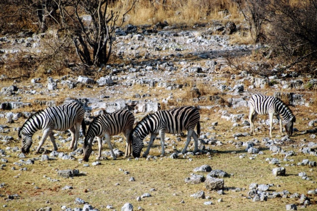 Retour sur notre voyage en solo Namibie - Botswana - Zimbabwe  9v7pvt10