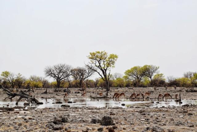 Retour sur notre voyage en solo Namibie - Botswana - Zimbabwe  Ac216j10