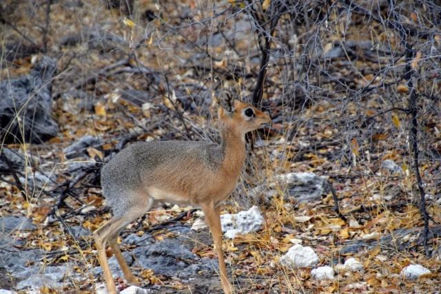 Retour sur notre voyage en solo Namibie - Botswana - Zimbabwe  B3bcvw10