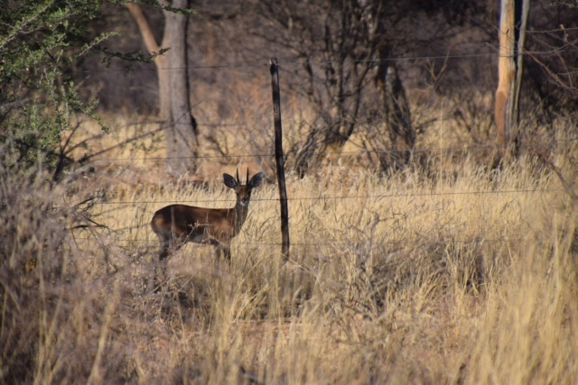 Retour sur notre voyage en solo Namibie - Botswana - Zimbabwe  Bci-o010
