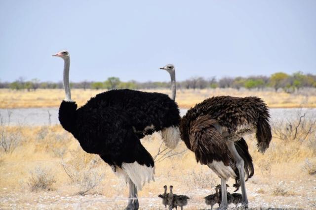 Retour sur notre voyage en solo Namibie - Botswana - Zimbabwe  C8zm0710
