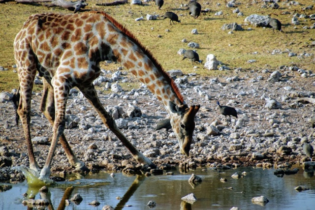 Retour sur notre voyage en solo Namibie - Botswana - Zimbabwe  Ilxaqx10