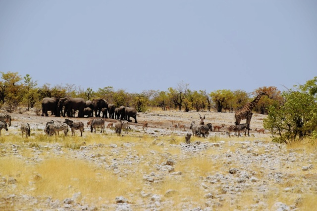 Retour sur notre voyage en solo Namibie - Botswana - Zimbabwe  Jz7pc710