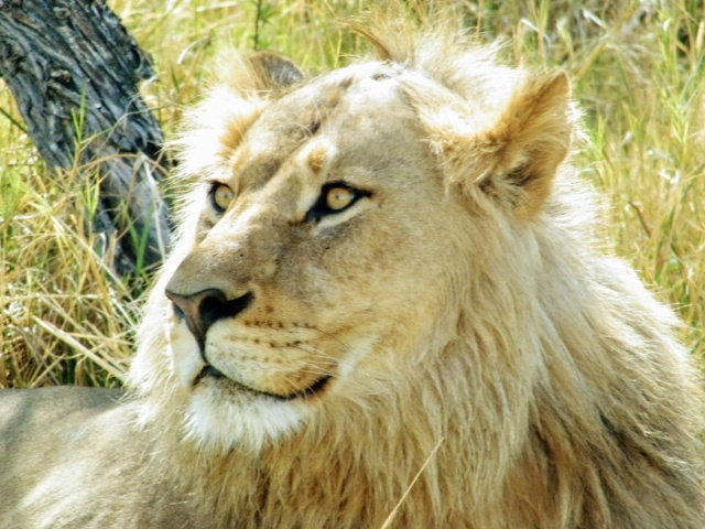 Retour sur notre voyage en solo Namibie - Botswana - Zimbabwe  Lezcxz10