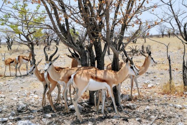 Retour sur notre voyage en solo Namibie - Botswana - Zimbabwe  Lkhirg10