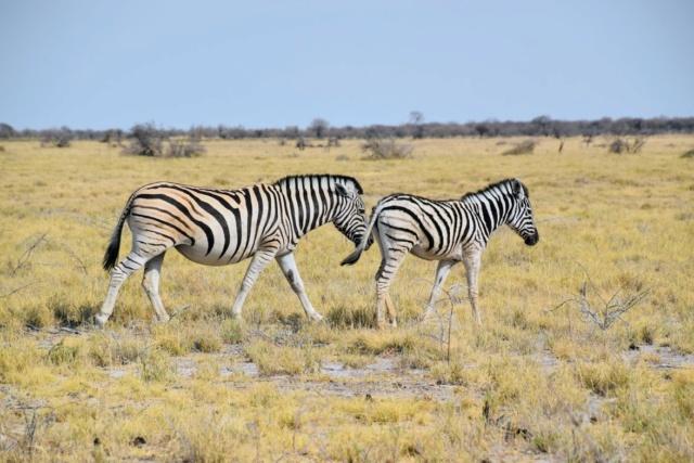 Retour sur notre voyage en solo Namibie - Botswana - Zimbabwe  P_wiqe10