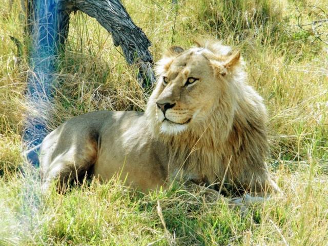 Retour sur notre voyage en solo Namibie - Botswana - Zimbabwe  Rw0wpm10