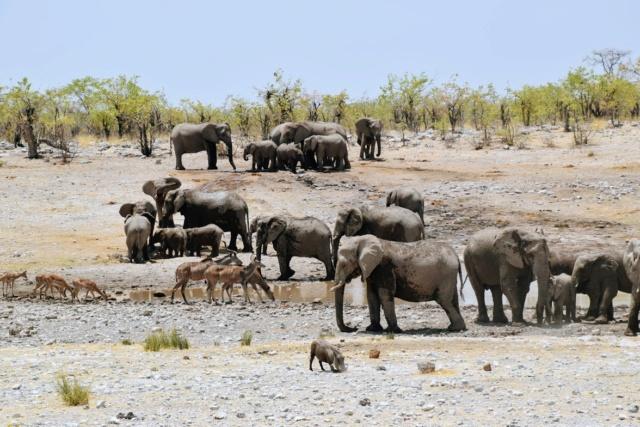 Retour sur notre voyage en solo Namibie - Botswana - Zimbabwe  Vahqmn10