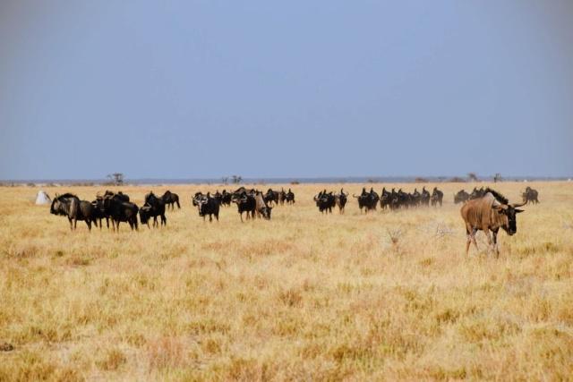 Retour sur notre voyage en solo Namibie - Botswana - Zimbabwe  Vonoq510