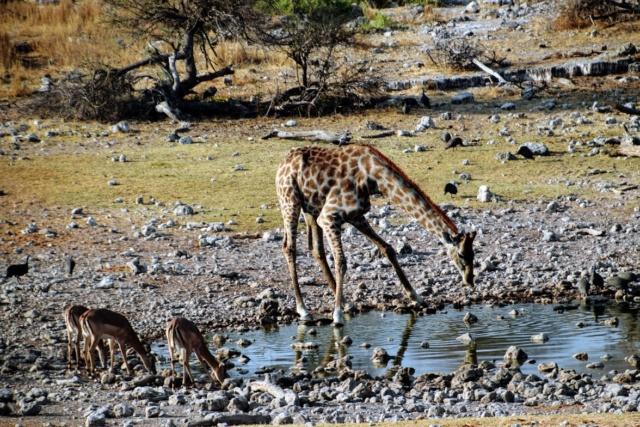 Retour sur notre voyage en solo Namibie - Botswana - Zimbabwe  Ye4ijj10