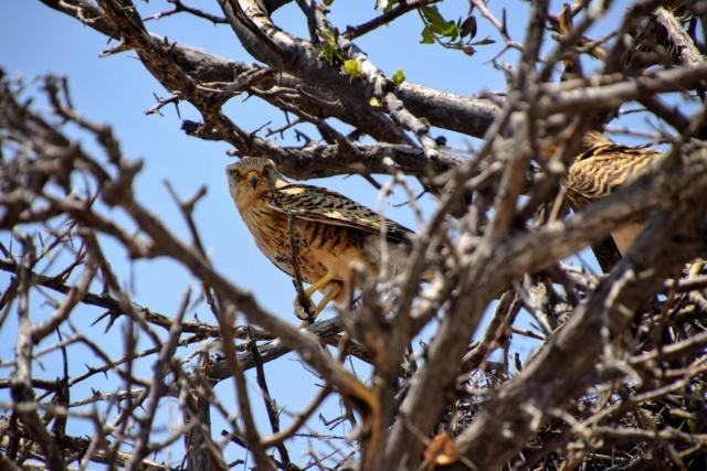 Retour sur notre voyage en solo Namibie - Botswana - Zimbabwe  Zmp_5c10