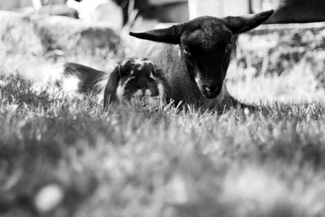 dessine moi un mouton ! Img_4438