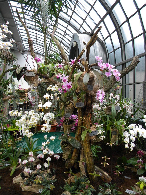 Orchideen-Ausstellungen aus aller Welt - Seite 4 1_dscn90