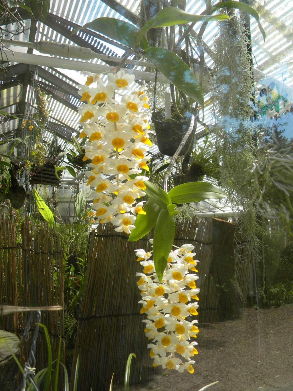 Orchideen-Ausstellungen aus aller Welt - Seite 4 1_dscn91