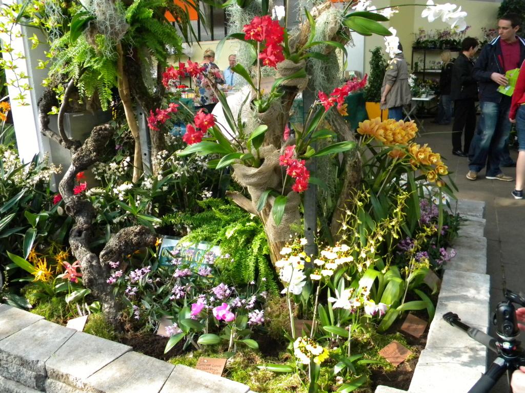 Orchideen-Ausstellungen aus aller Welt - Seite 4 2_dscn29