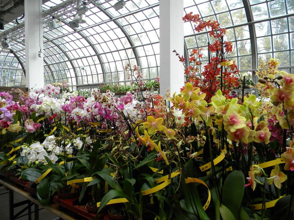 Orchideen-Ausstellungen aus aller Welt - Seite 4 2_dscn30