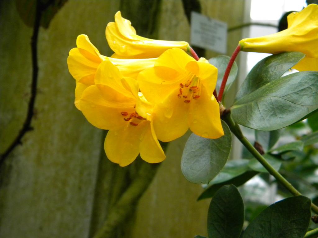 Ericaceae 3_dscn14
