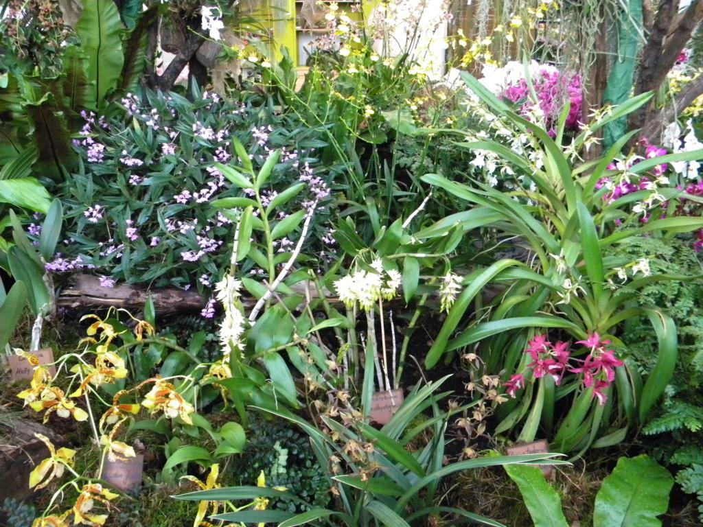Orchideen-Ausstellungen aus aller Welt - Seite 4 4_dscn66