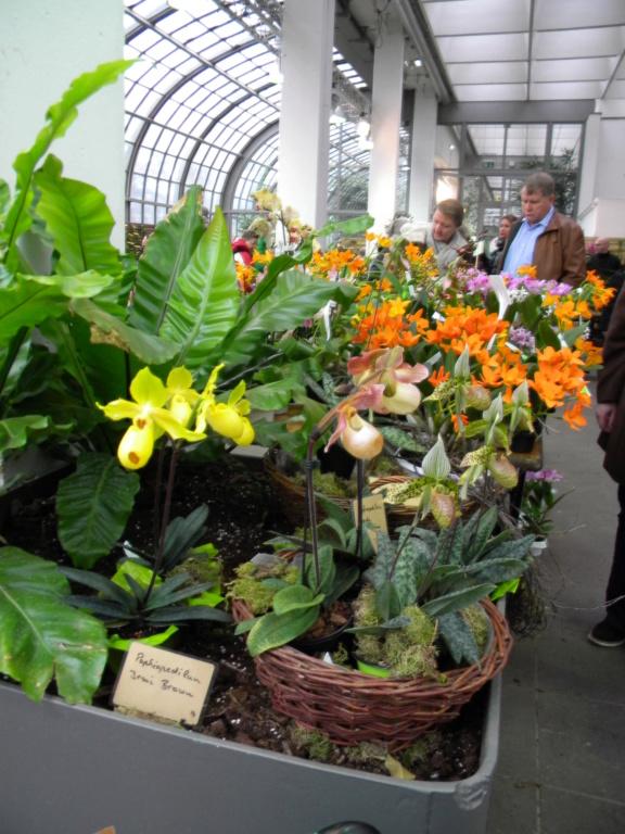 Orchideen-Ausstellungen aus aller Welt - Seite 4 Dscn0112