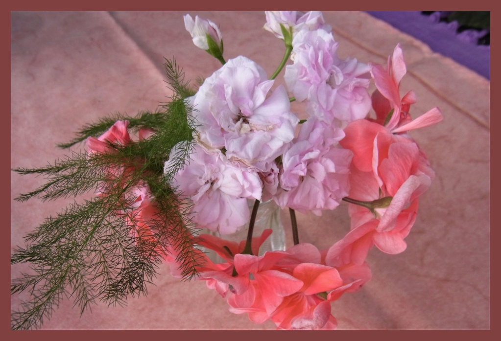 Pelargonium - Pelargonien - alle nichtsukkulenten Arten und Sorten - Aussaat - Stecklinge - Seite 22 R0012810