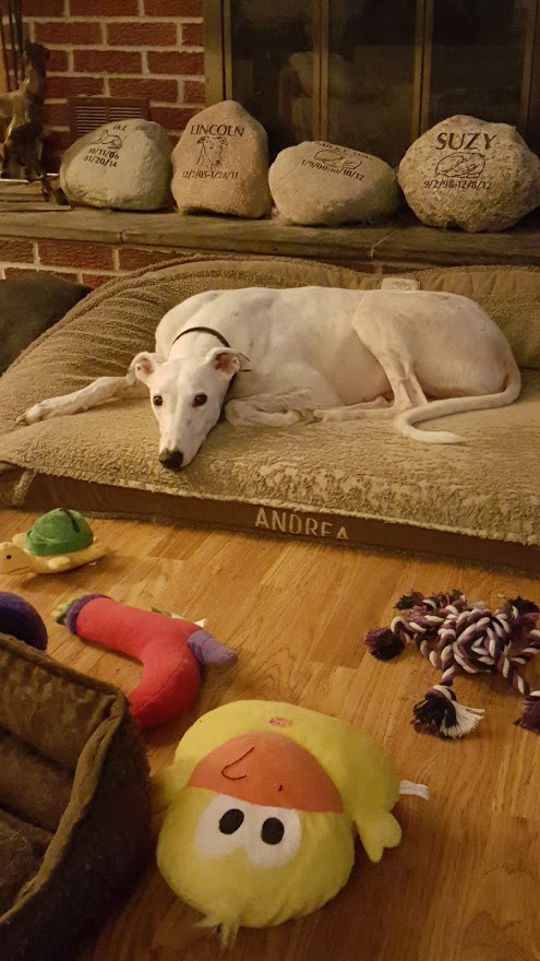 Thorpe says which toy 20151213