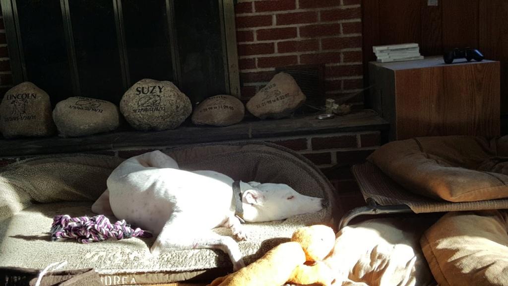 Thorpe loves the sun 20151214