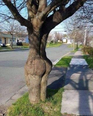 That Tree 51511110