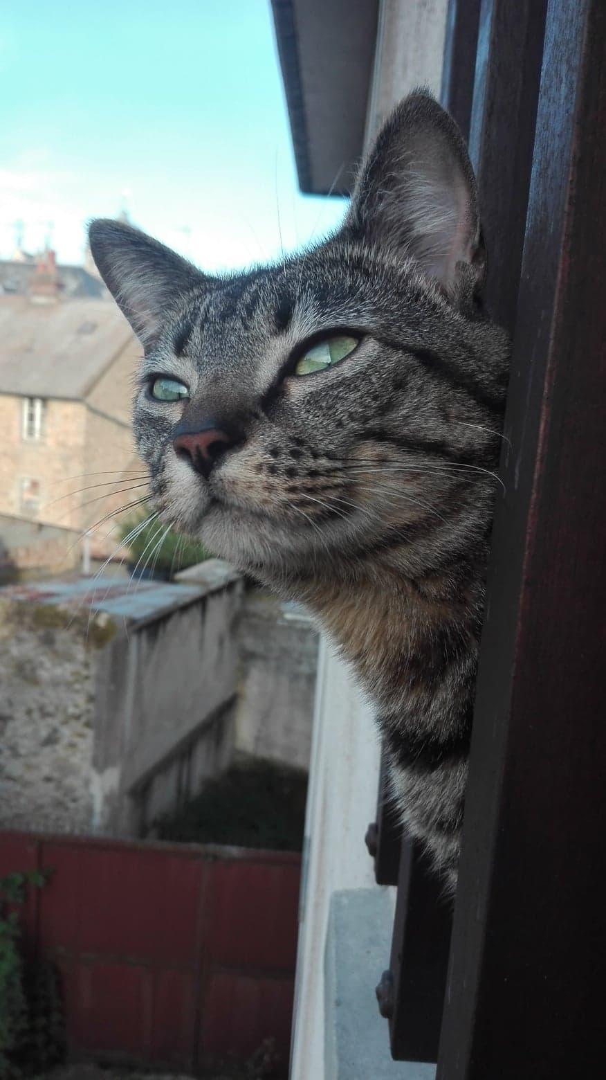 Un amour de chat 41768510