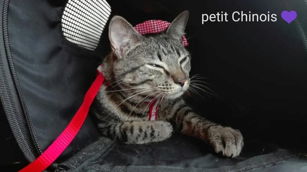 Un amour de chat 41774010