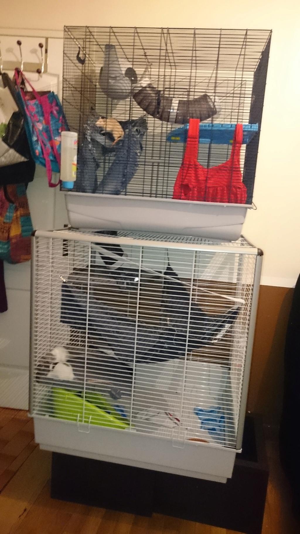 A Vendre Cage Ferplast Furet/Rat/ Rongeur XL et Cage Freddy Savi 92 RP Dsc_0011