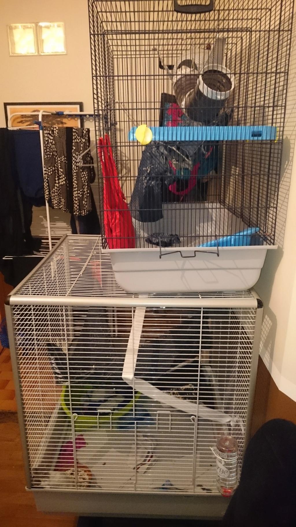 A Vendre Cage Ferplast Furet/Rat/ Rongeur XL et Cage Freddy Savi 92 RP Dsc_0012