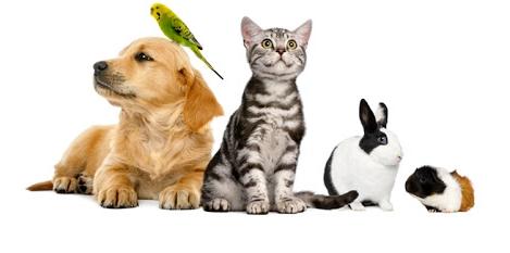 Sondage: Vous et l'animal domestique. - Page 3 Aniunn10