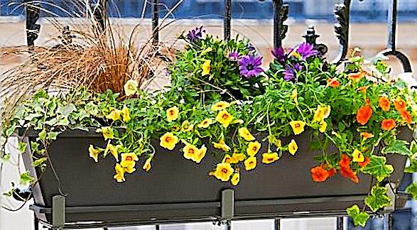 Faites-vous pousser une plante en pot durant l'été? Zzun-b10