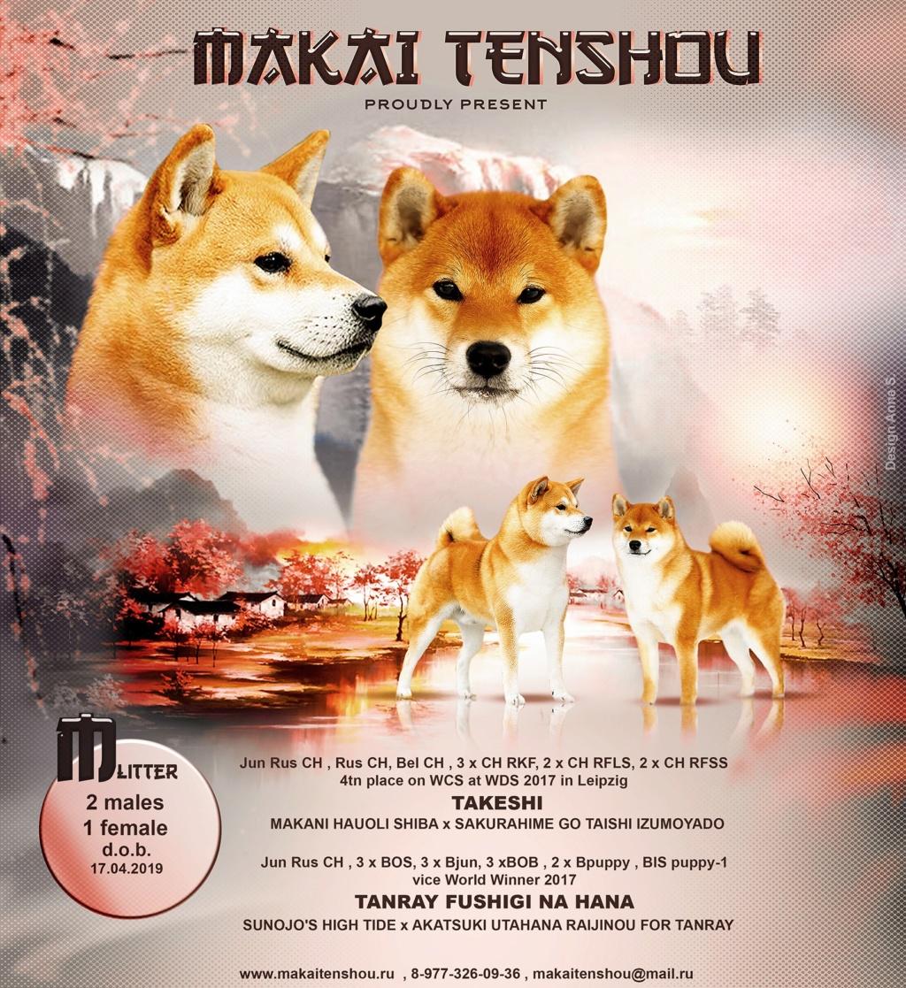 Щенки питомника MAKAI TENSHOU (Takeshi x Tanray Fushigi na Hana) 61826810