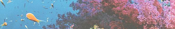 Memories [Kitten Search] Coral10