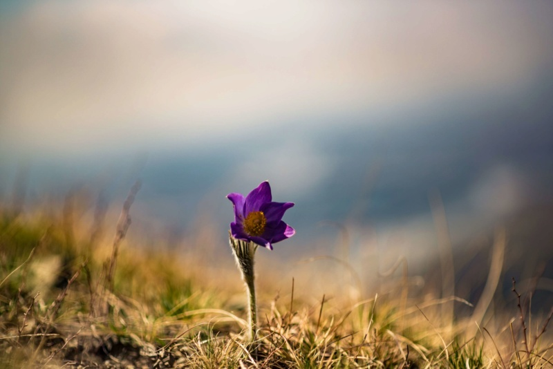 Samo jedan cvet - Page 2 30943610