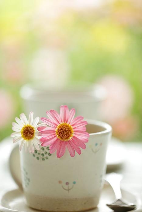 najromanticnija soljica za kafu...caj - Page 7 66r7mb11