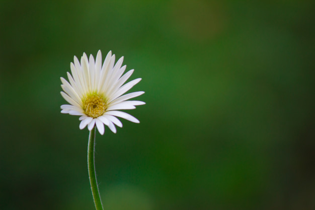 Samo jedan cvet - Page 2 Flor-s10