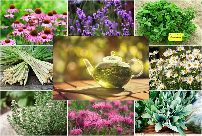 CVECE - Page 6 Herbal10