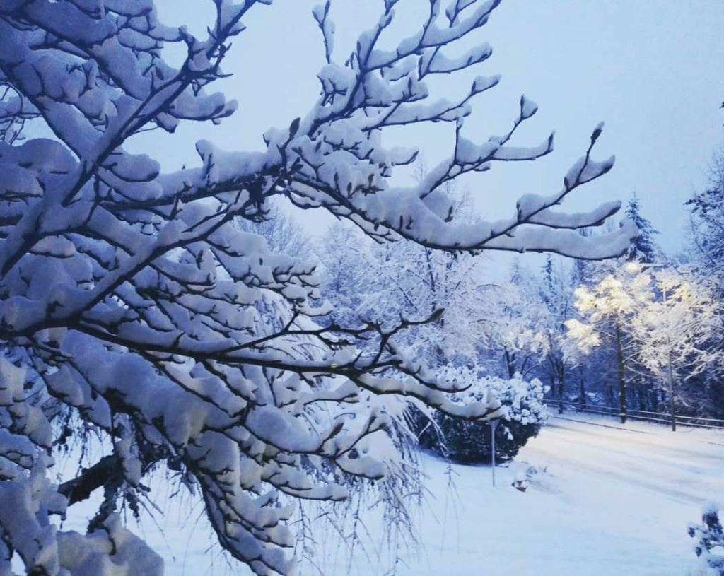 Fotografija dana - Page 6 Snow10