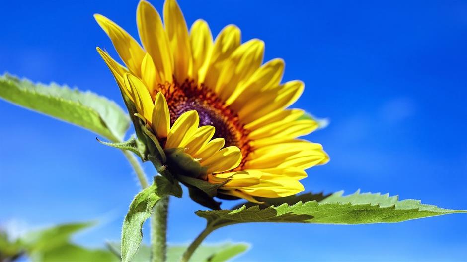 Postavi sliku i zatraži sledeću - Page 20 Sun-fl10