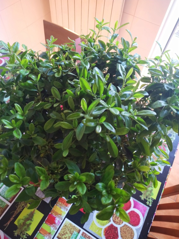 Futuri bonsai Img_2014
