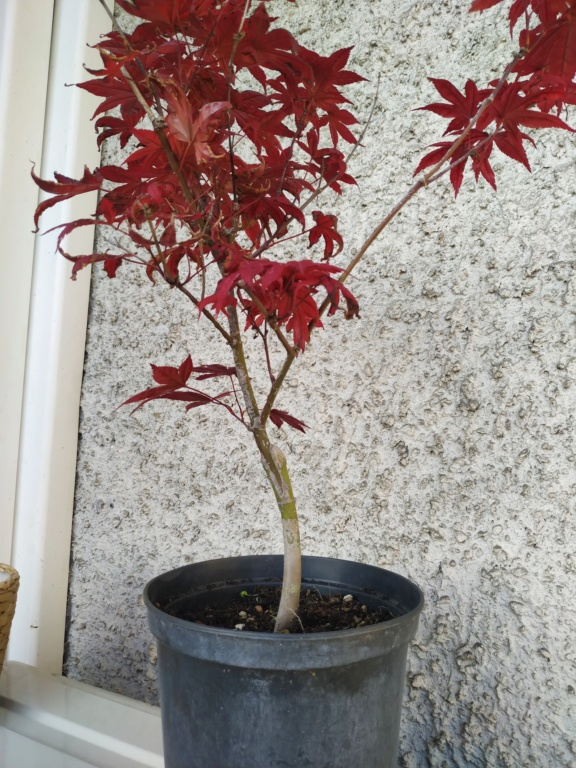 Futuri bonsai Img_2020