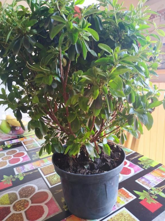 Futuri bonsai Img_2021