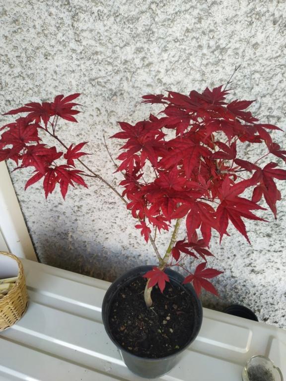 Futuri bonsai Img_2022